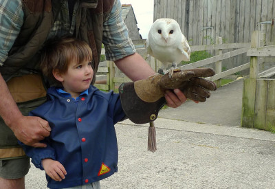 Meeting Owls at the Screech Owl Sanctuary in Cornwall