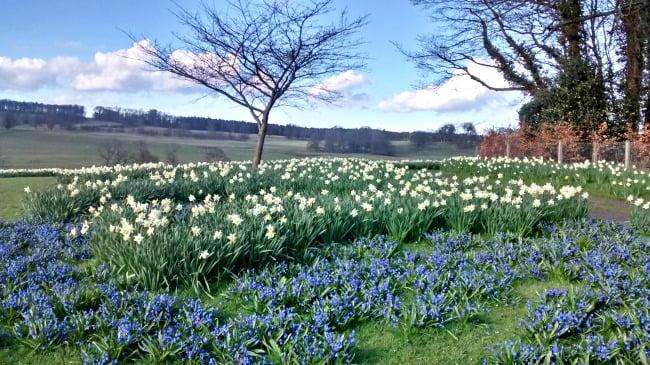 Bluebells outside Alnwick Castle