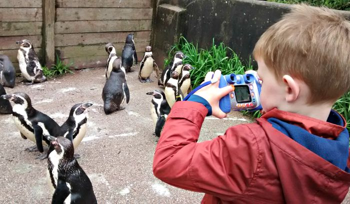 Penguins at the South Lake Safari Zoo