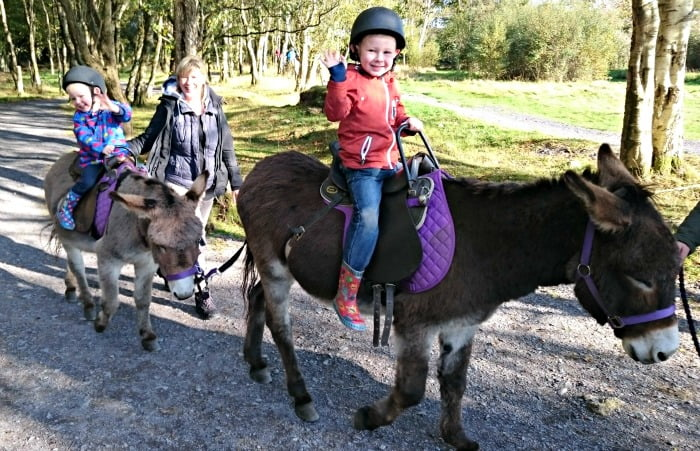 Donkey Rides at GreenWood Forest Park