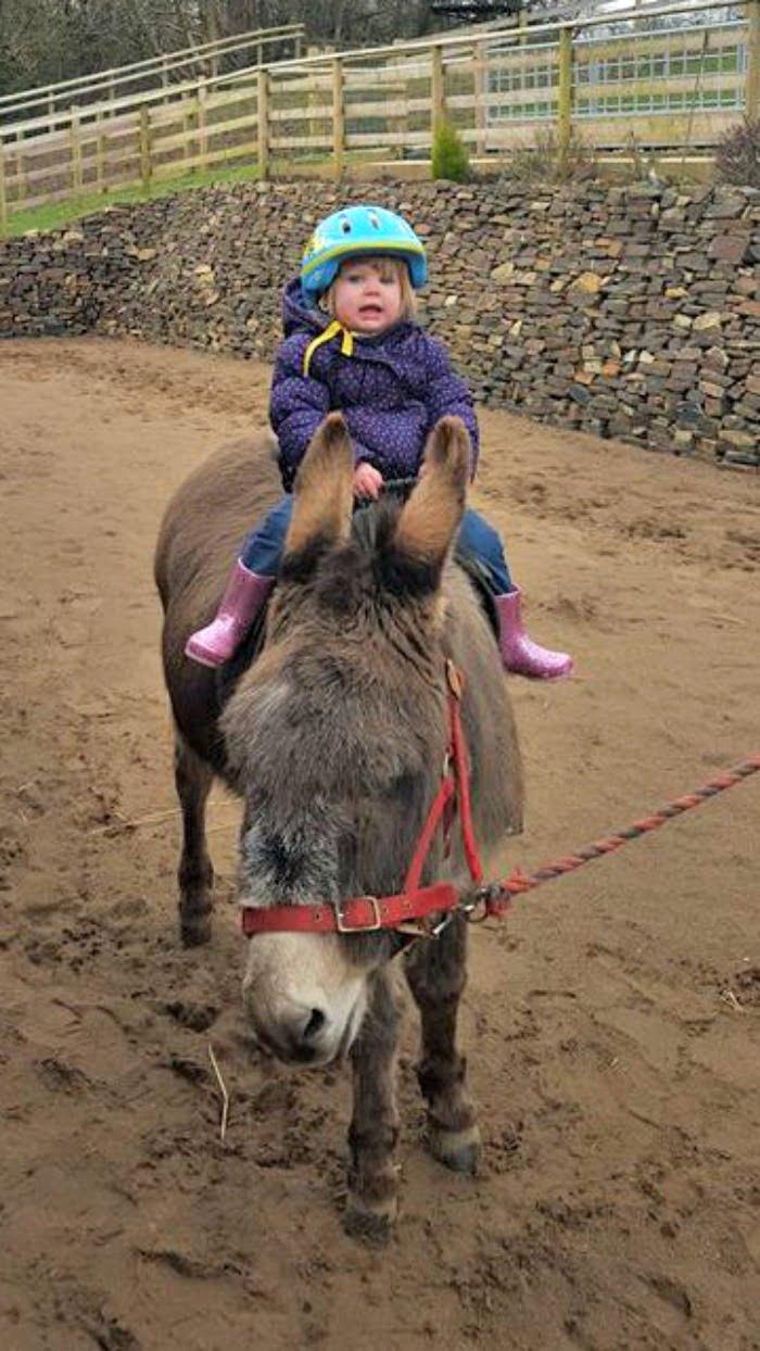 Horse riding at North Hayne Farm