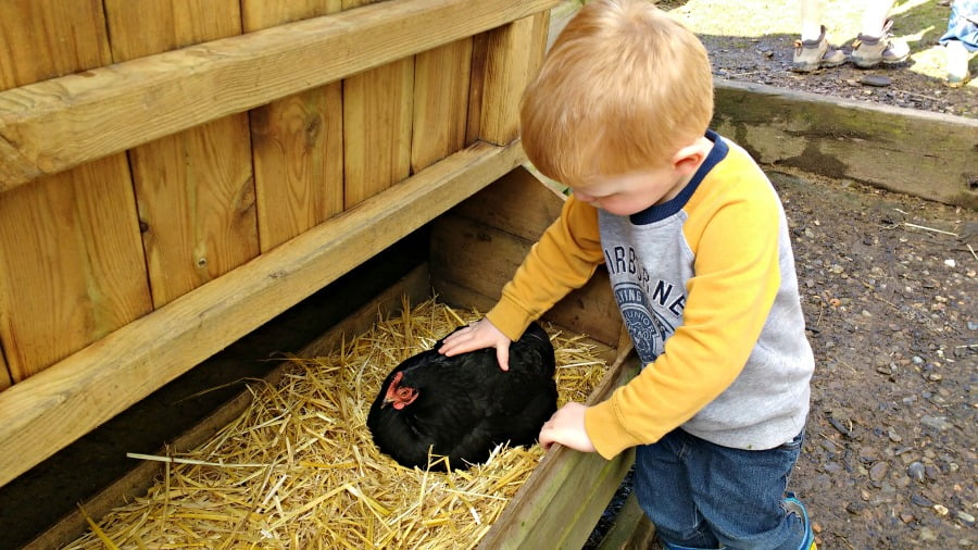 Toddler Friendly Farm Holidays