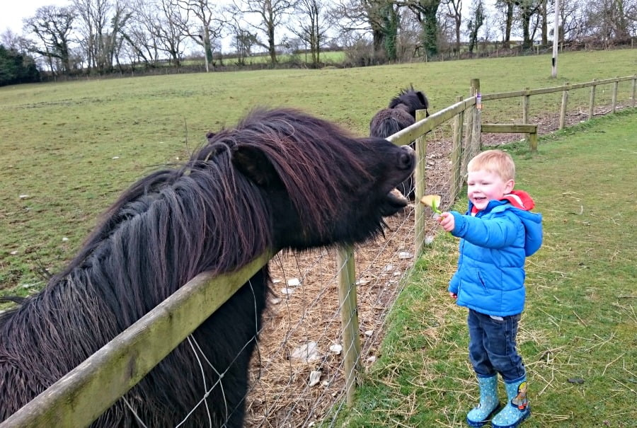 Daniel feeding a donkey at Clydey Cottages