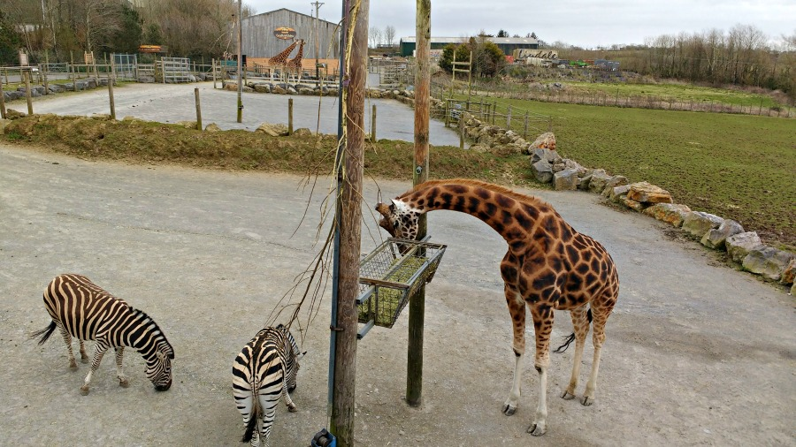 Review of Folly Farm: seeing the giraffes and zebras