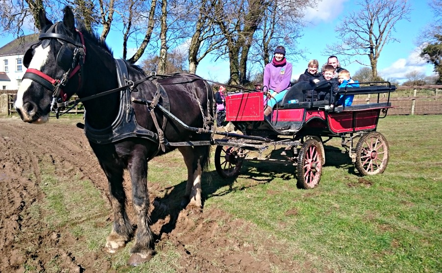 On a horse and cart at Dyfed Shire Horse Farm