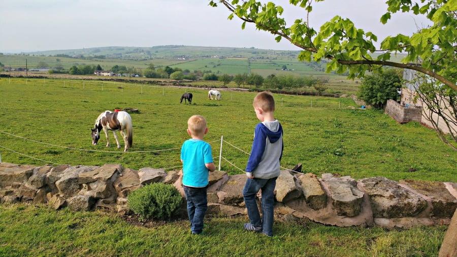 The horses at Upper Greenhills Farm