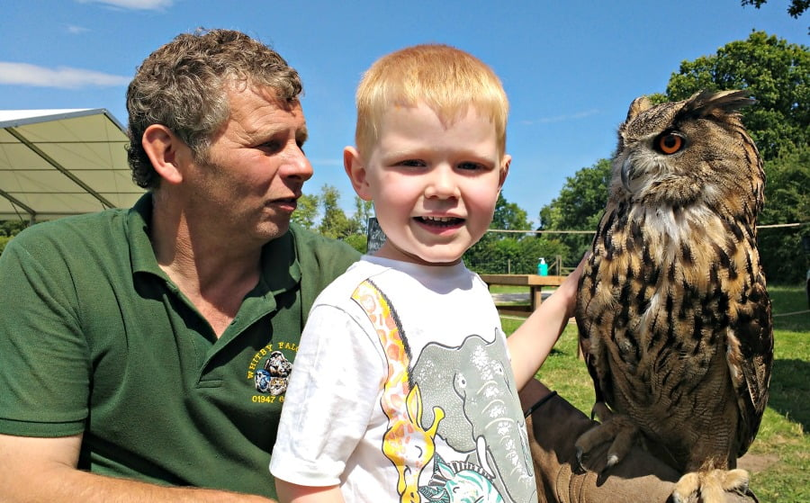 Meeting an eagle owl at the York Maze