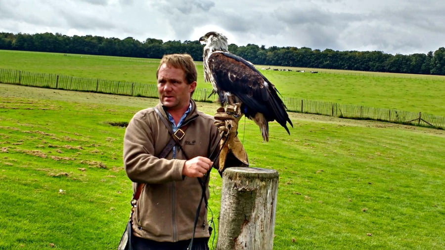 Flying Demo at the National Bird of Prey Centre