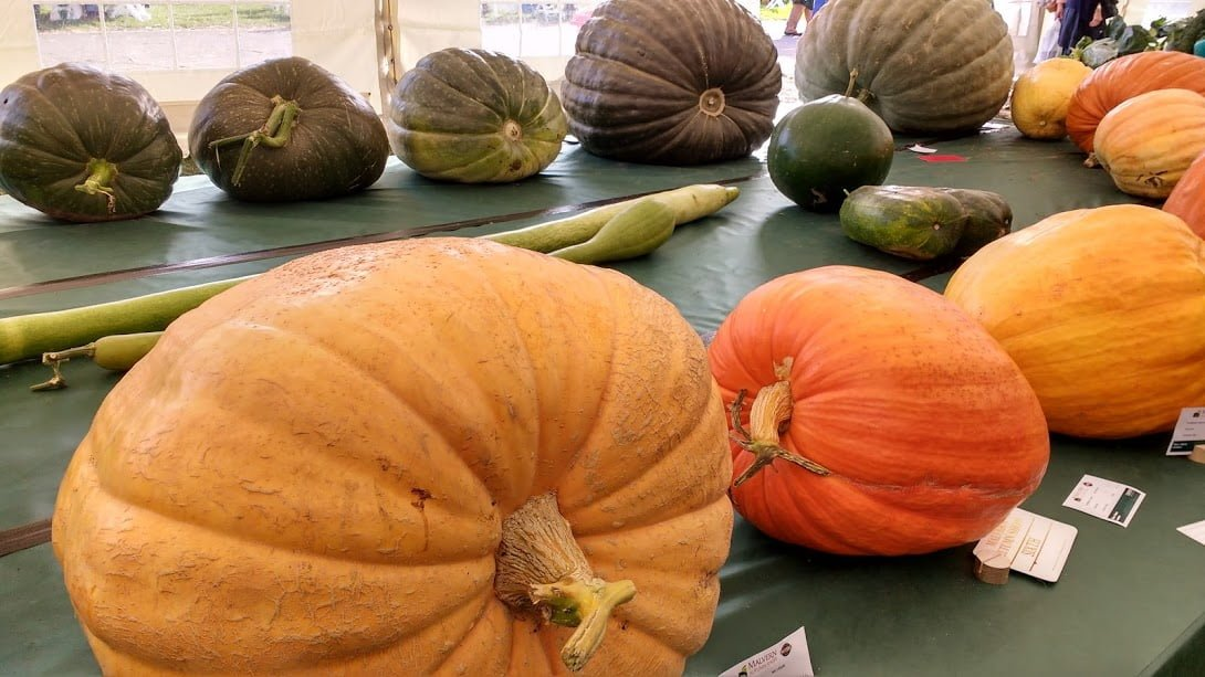 Giant vegetables at the Malvern Autumn Show