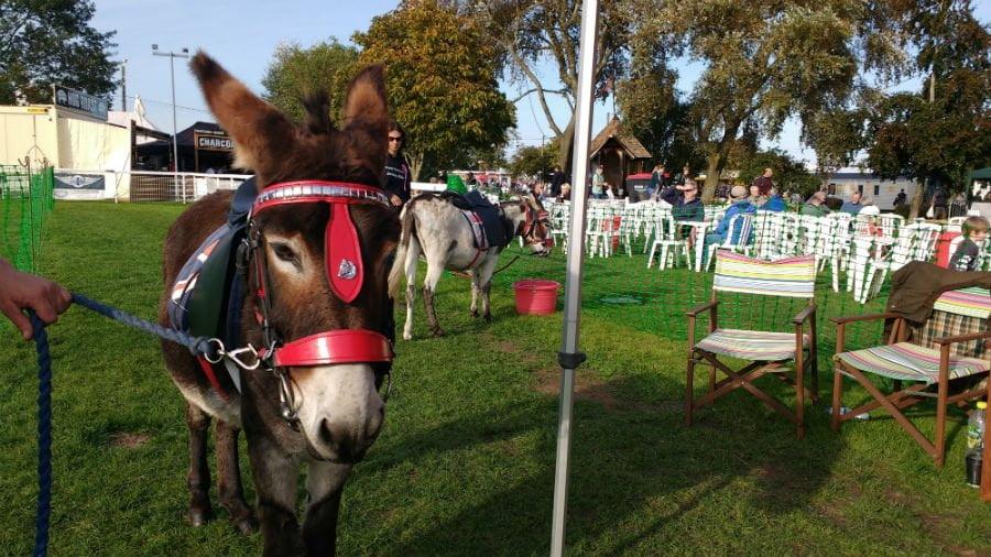 Donkey Rides at the Malvern Autumn Show