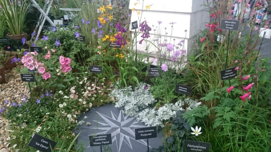 Flowers at the Malvern Autumn Show