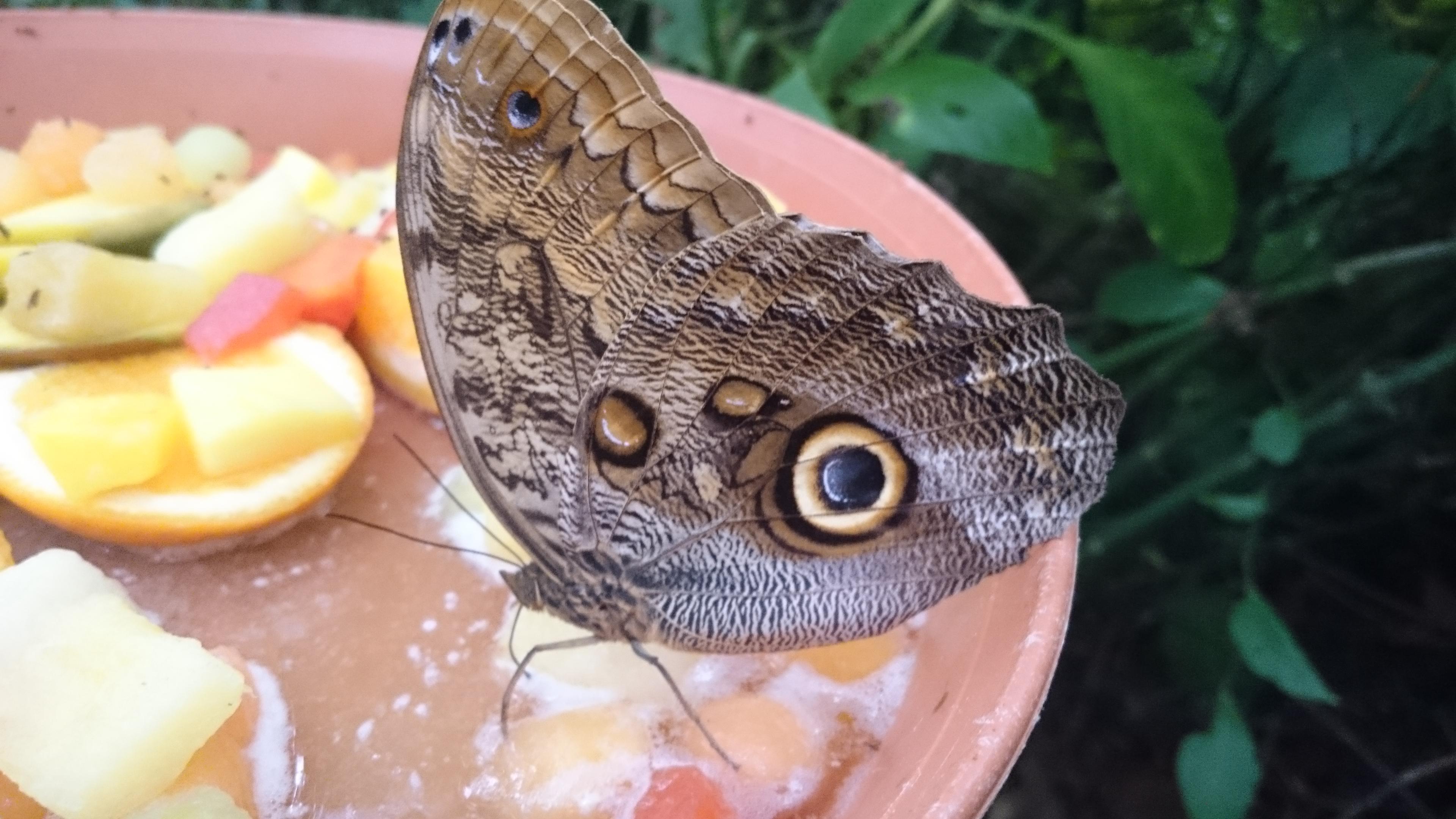 Butterflies at Rotterdam Zoo