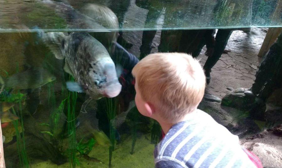 Fish at Rotterdam Zoo