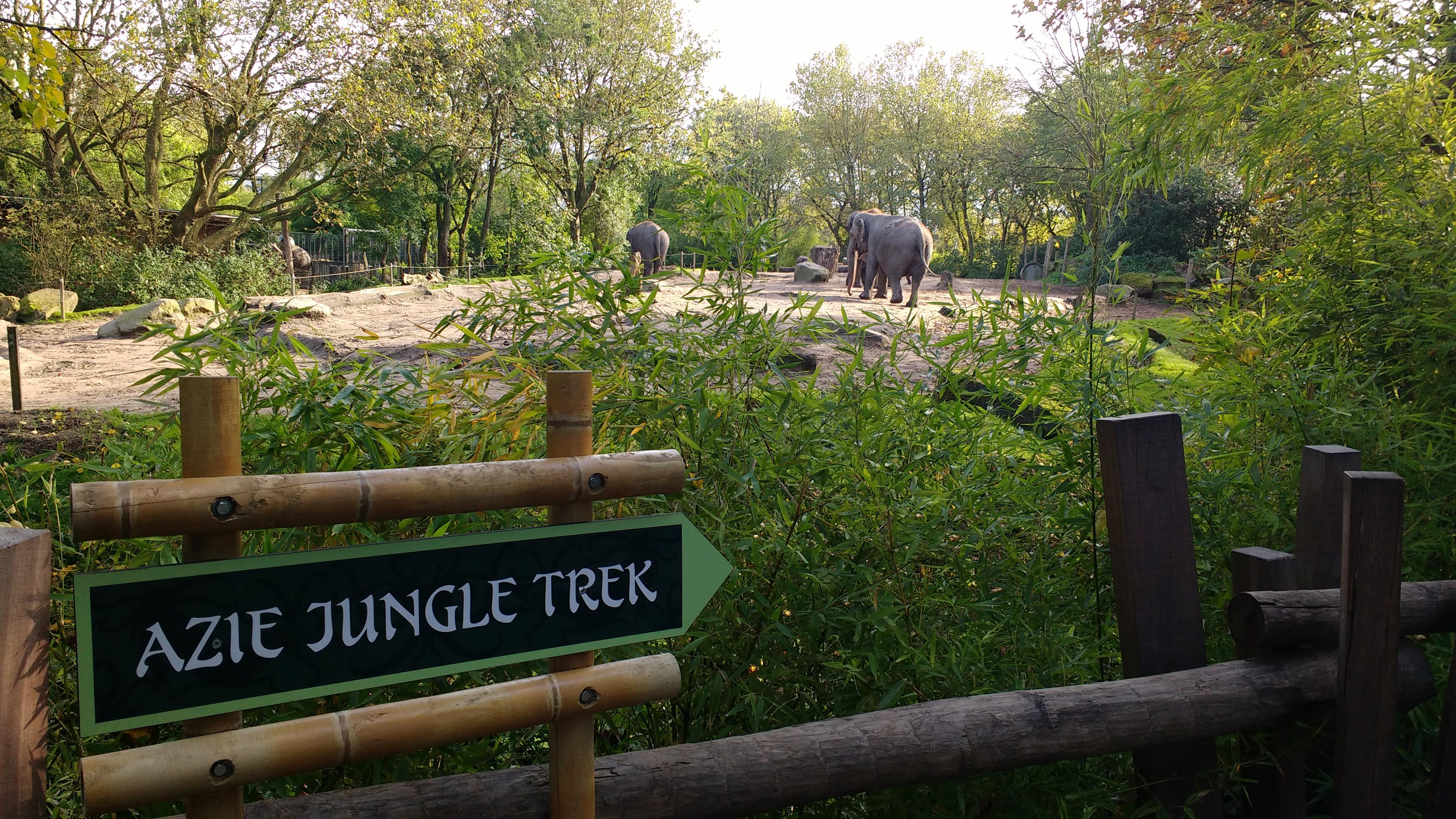 Elephants at Rotterdam Zoo