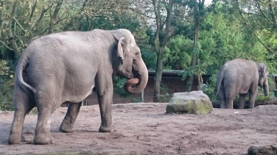 Elephant at Rotterdam Zoo