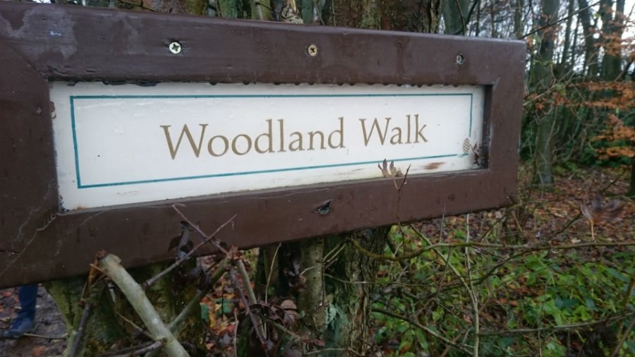 Woodland Walk at Sandybrook Country Park
