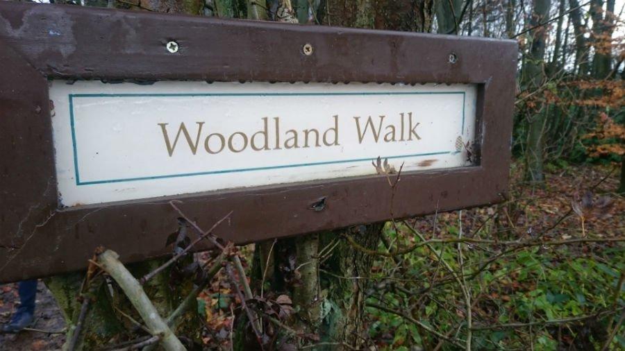 Woodland Walk at Sandybrook Country Park