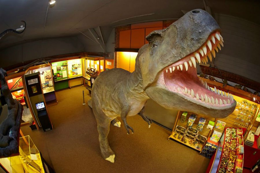 Top 10 Dinosaur Days Out For Toddlers Kiddieholidays