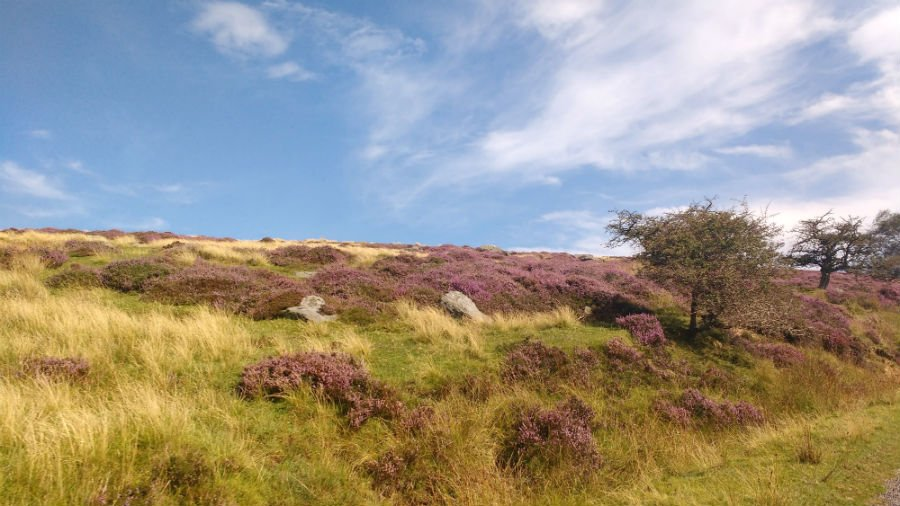 North York Moors with toddlers