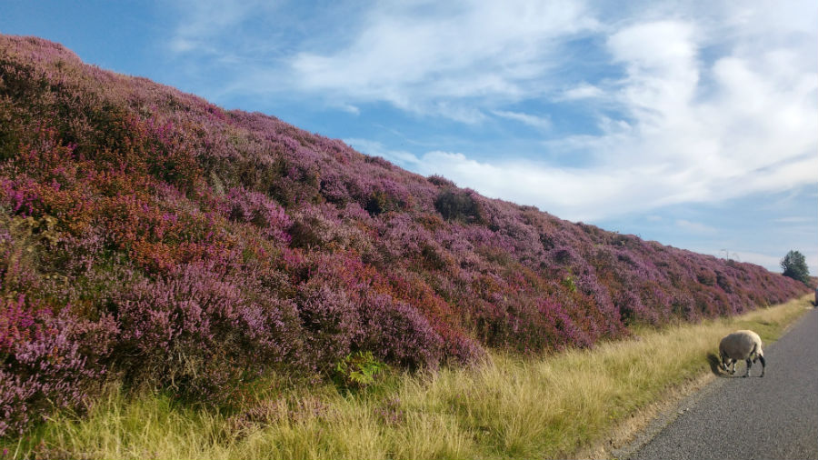 The North York Moors with toddlers