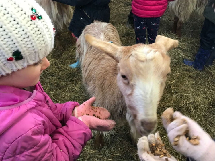 Animal feeding at Nettlecombe Farm