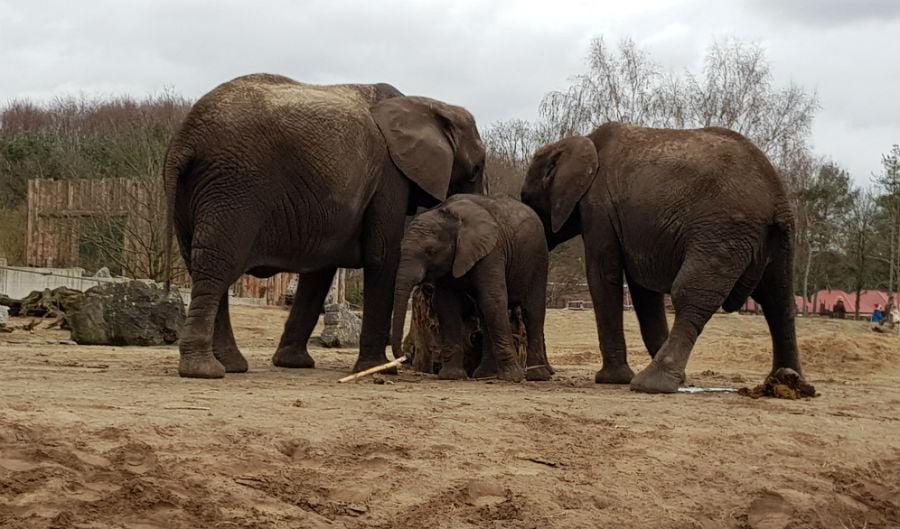 Elephants at Beekse Bergen Safari Park