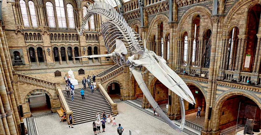 Natural History Museum - cheap things to do in London with a toddler