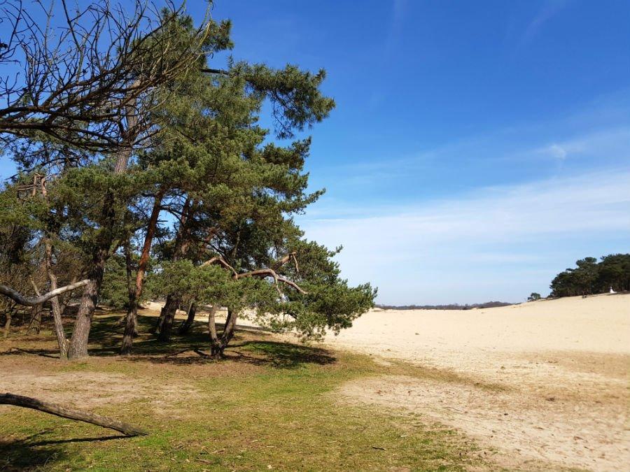 Drunen National Park in the Netherlands