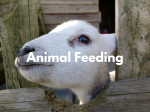 toddler friendly place to stay with animal feeding