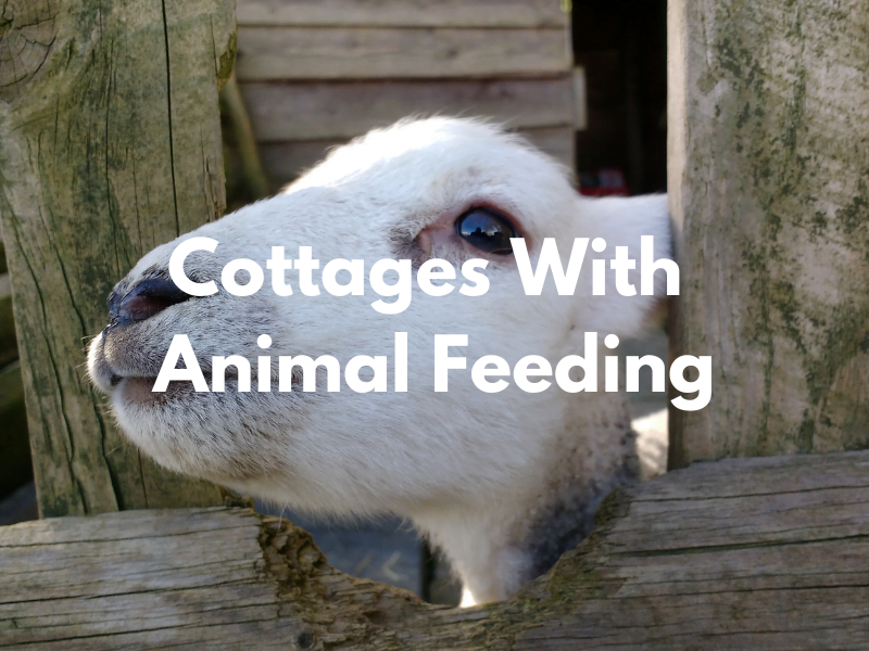 baby and toddler friendly cottages with animal feeding